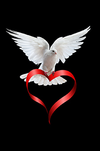 Dove carrying ribbon in the shape of a heart